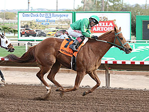Absolutely Cool wins the 2014 Phoenix Gold Cup Handicap.