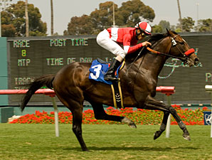Acclamation wins the 2010 Jim Murray Stakes.