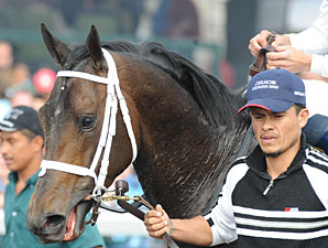 Advice wins the 2009 Coolmore Lexington.