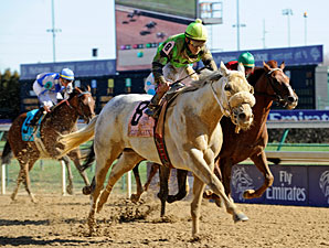 Afleet Again in the Breeders' Cup Marathon.