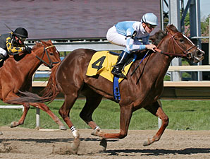 Agave Kiss wins the 2012 Trevose Stakes.