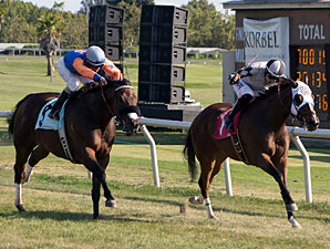 Ain't No Other wins the 2013 Jess Jackson Owners' Handicap.