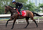 Hong Kong Cup Day: Trackwork Saturday, 12/08/2012