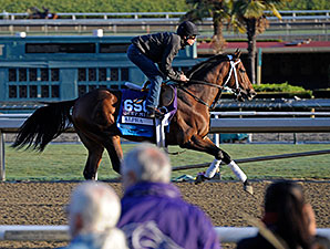 Alpha - 2013 Breeders' Cup, October 29, 2013.
