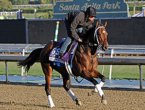 Alpha - 2013 Breeders' Cup, October 30, 2013.