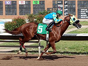 Alsono wins the 2014 Duke City Sprint Stakes.