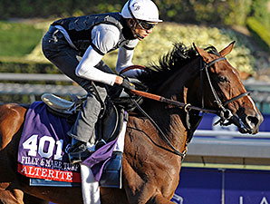 Alterite - Breeders Cup - October 31, 2013