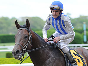 Alternation wins the 2011 Peter Pan.
