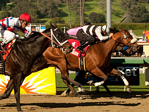 Amazombie wins the 2011 Sunshine Millions Sprint.