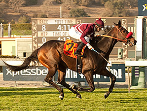 Ambitious Brew wins the 2014 Sensational Star Stakes.