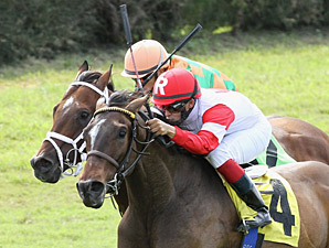Amen Kitten wins the 2013 Tropical Park Derby.