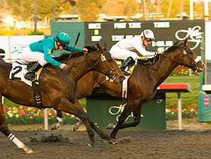 American Lion wins the 2009 Hollywood Prevue.