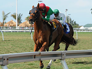 Animal Kingdom Allowance Win, 02/18/12.