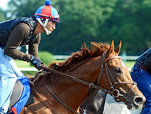 Animal Kingdom at Belmont on June 2011.