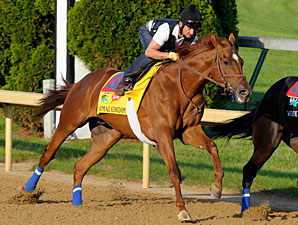 Animal Kingdom works at Churchill Downs.