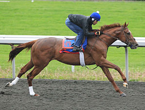 Animal Kingdom works at Keeneland on April 23, 2011.
