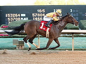 Apropos wins the 2014 American Beauty Stakes.