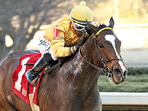 Apropos wins the 2014 American Beauty.