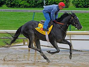 Archarcharch at Churchill Downs.
