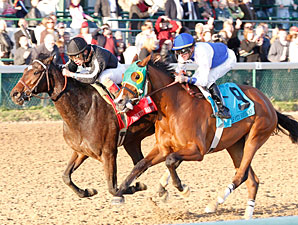 Arena Elvira wins the 2011 Falls City.