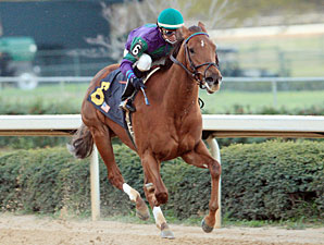 Arienza in her 2011 Oaklawn Debut, daughter of Azeri.
