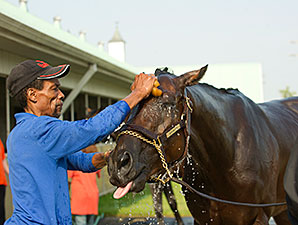 Asserting Bear gets a bath at Woodbine, June 30, 2014.