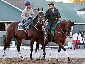 Atta Boy Roy works at Churchill Downs on October 22, 2010.
