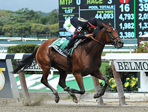 Awesome Feather wins the 2012 Nasty Storm.