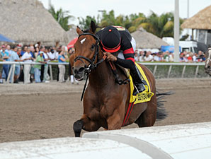 Awesome Feather wins the 2012 Sunshine Millions Distaff.