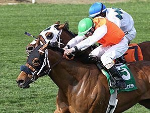 Az Ridge wins the 2014 Turf Paradise Handicap.
