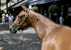 Saratoga Sale 2012: Galileo Fillies