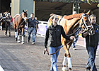 Breeders' Cup News Minute - 10/29/2013 - Day 3