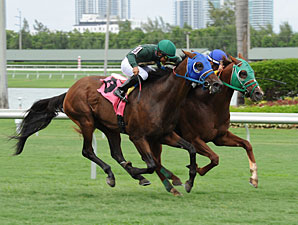 Backseat Memories/Grand Tito dead heat in 2013 Showing Up Stakes.