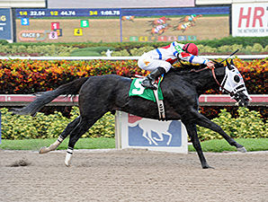 Bahamian Squall wins an allowance/claiming race at Gulfstream Park, 10/02/2014.