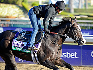 Bahamian Squall - 2013 Breeders' Cup, October 30, 2013.