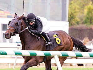 Baltimore Belle wins the 2011 Lady Baltimore Stakes.