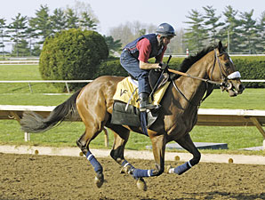 Barbaro at Keeneland, April 15, 2006.