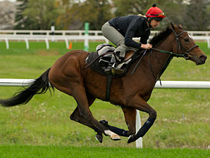 Barefoot Lady - Woodbine October 9, 2012.