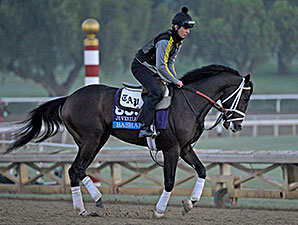 Bashart works for the Breeders' Cup.