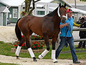 Bayern arrives at Pimlico on May 14, 2014.