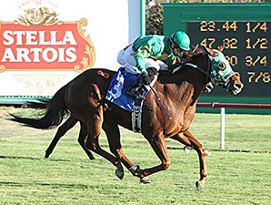 Bear Facts wins the 2014 Chandler Stakes.