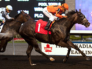 Bear No Joke wins the 2013 Kenora Stakes.