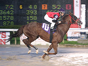Bedazzle Seattle - New Track Record, Delta Downs, March 15, 2014.