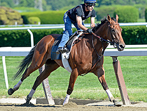 Beholder works at Belmont Park June 2, 2014.
