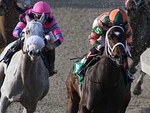 Believe You Can wins the 2013 Tiffany Lass.