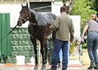 Belmont Stakes: Ride On Curlin Bath 05/30/2014