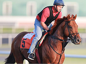 Berlino Di Tiger jogs at Meydan March 24, 2014.