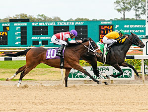 Bert B Don (left), 2nd in the Pasco Stakes.