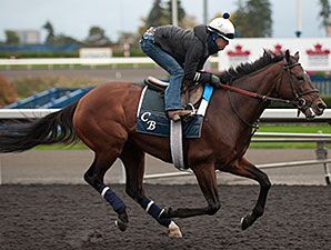 Big Blue Kitten - Woodbine, October 18, 2014.