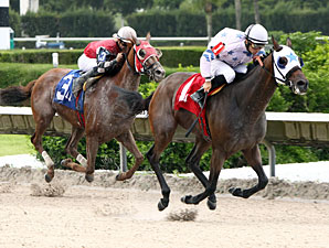 Black Diamond Cat wins the 2013 Ponche Handicap.